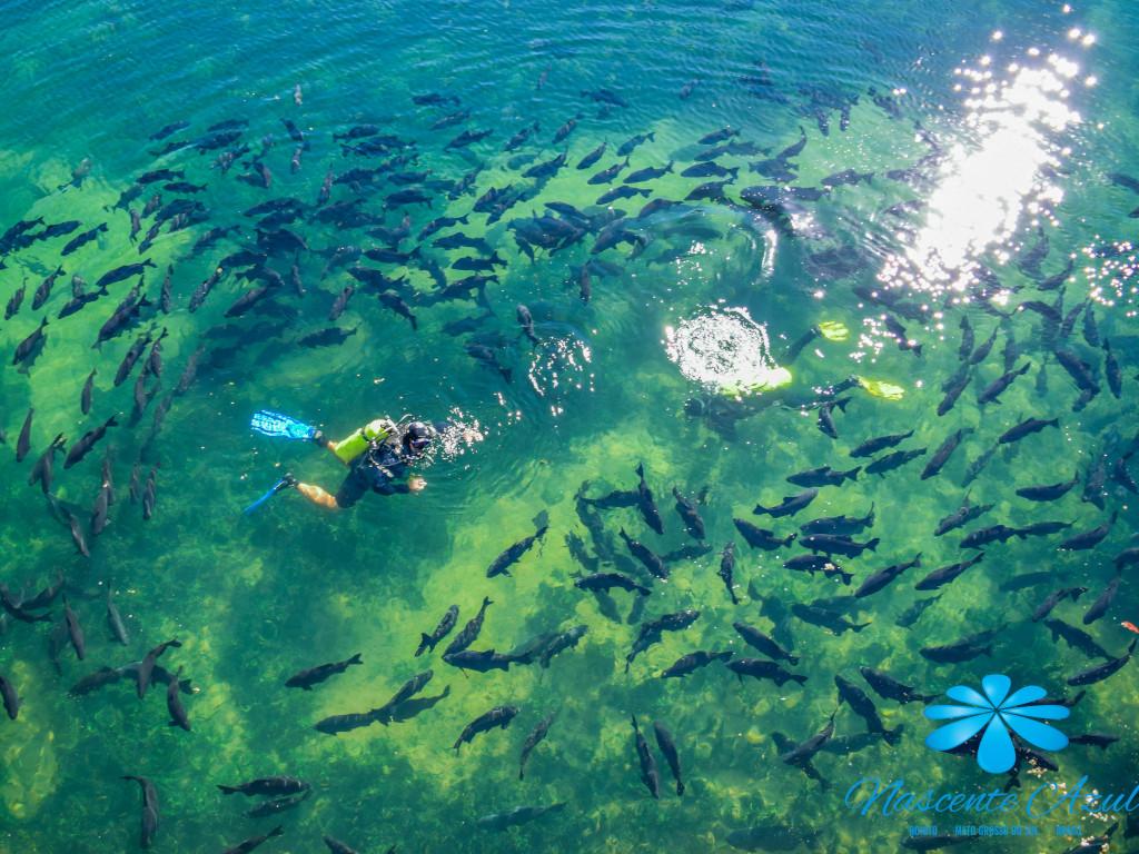 Em Bonito, Nascente Azul ganhará museu subaquático